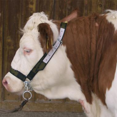 Недоуздок (хомут) для коров с цепью, нейлон, усилен кожей. Желтый